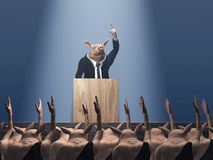 Vote at the pig meeting Royalty Free Stock Photo