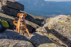 Votre meilleur ami même à la crête de la montagne Image libre de droits