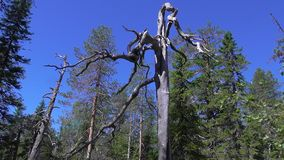 Vottovaara Karelia Royaltyfria Foton