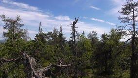 Vottovaara Karelia - fula träd Arkivbild