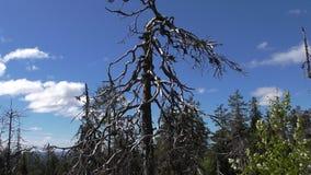 Vottovaara Karelia - fult träd royaltyfri foto