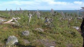 Vottovaara Karelia - sfären av de döda träden och stenarna Royaltyfria Foton