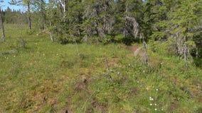 Vottovaara Karelia - träsk på berget Arkivbilder