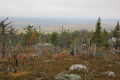 Vottovaara mountainside Royalty Free Stock Photos