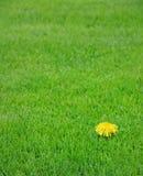 Vous sentez-vous différent ? Image stock