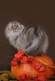 Vouwen in de pompoen Stock Afbeeldingen