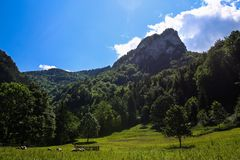 Vouwenschapen onder de heuvel Rozsutec royalty-vrije stock afbeelding