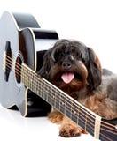 Vovve och gitarr. Royaltyfri Fotografi