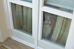 Vovve som väntar vid ett fönster Arkivfoto