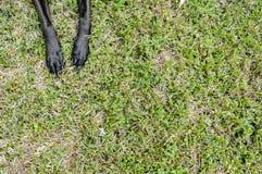 Vovven tafsar i gräset arkivfoton