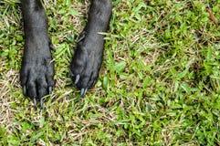 Vovven tafsar sträckt ut i gräset royaltyfria bilder