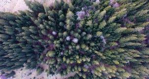 Voyage, voyage, été et concept de paysage - le bourdon a tiré de la vue aérienne pour verdir des arbres forestiers banque de vidéos