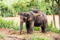 Voyage d'éléphant Photo stock