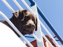 Voyage de bateau de bateau de chien Photo libre de droits