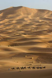 Voyage de chameau à travers le Sahara Photographie stock