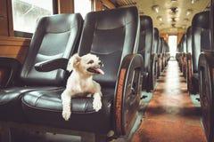 Voyage de chien par chemin de fer photos stock