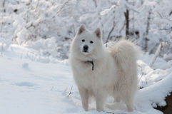 Voyage de forêt en hiver Photographie stock