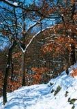 Voyage de l'hiver aux bois images stock