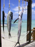 Voyage de pêche Photo stock