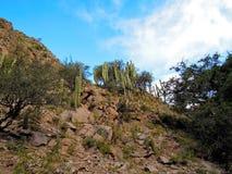 Voyage de Rio le Colorado de del de Cascadas Image stock
