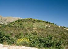 Voyage l'Europe de ciel bleu de nature de fleur de la Grèce Leucade de serre à raisin Photos libres de droits