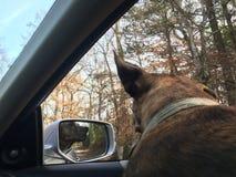 Voyage par la route avec le chien Photo stock