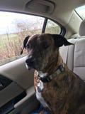 Voyage par la route avec le chien Photo libre de droits
