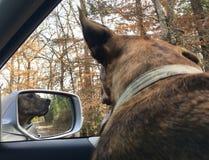Voyage par la route avec le chien Photographie stock libre de droits