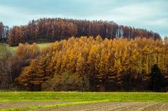 Voyage par la route du Hokkaido Photos libres de droits