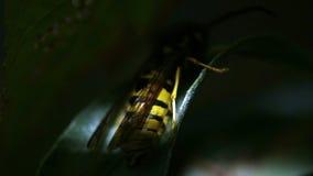 Voyage par les beaux coins de la nature photo libre de droits