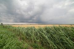 Voyage sur le pays du fleuve Pô de del de delta Photo libre de droits