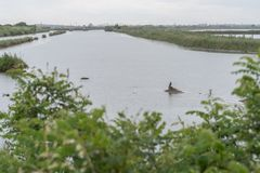 Voyage sur le pays du fleuve Pô de del de delta Images stock