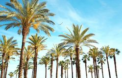 Voyage, tourisme, vacances, concept de vacances d'été de nature - Image libre de droits