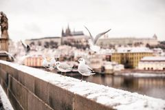 Voyage vers Prague photo stock