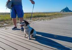 Voyageur élégant de chien en Mont Saint-Michel France images libres de droits