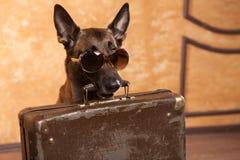 Voyageur de chien avec des cas dans les eyeglassess photos libres de droits