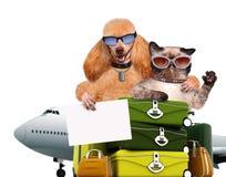 Voyageur de chien et de chat Photo stock