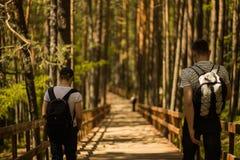 voyageurs dans la forêt de pin Photo stock