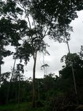 Voyagez en Amazone - les merveilles de la nature photo libre de droits