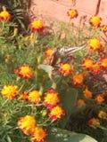 Voyez la beauté de l'amour de nature tout Photo libre de droits