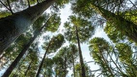 Voyez le ciel par les arbres Image stock