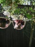Voyez le monde par les verres roses photos stock