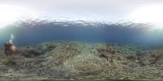 360 vr潜水者游泳与在珊瑚礁的一只乌龟 股票视频