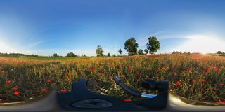 360VR红色鸦片在日出期间的一个草甸 库存照片