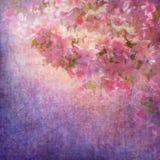 Vår Cherry Blossom Royaltyfri Fotografi
