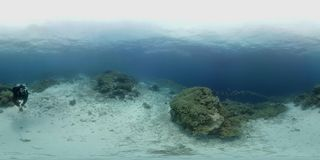 360 vr diver swims on a coral reef