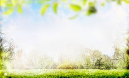 Vår- eller sommarnaturbakgrund med lövverk Arkivbild