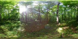 360 vr forest timelapse panoramic 4k. 360 vr forest timelapse panoramic video 4k stock footage