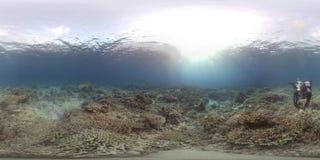 360 vr nurek z dwa żółwiami na rafie koralowej zbiory