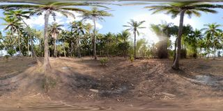 Palm grove in asia vr360 royalty free stock photo